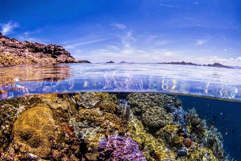 Komodo corals