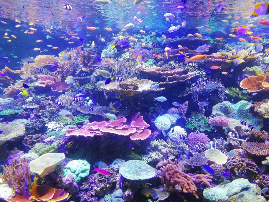 travel off the beaten path pristine coral reefs